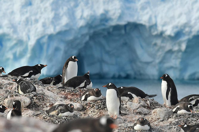 ANT—Itinerary—Day-08—South-Shetland-Islands,-Gentoo-Penguins—iStock-648525888