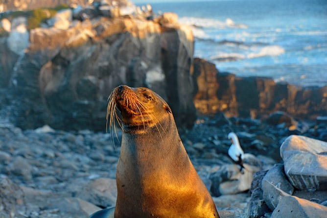 Day-10—Galapagos-sea-lions—iStock-1054834716